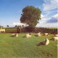 Purchase KLF - Chill Out