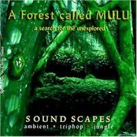 Purchase A Forest Called Mulu - A Search For The Unexplored