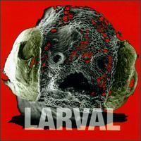 Purchase Larval - Larval