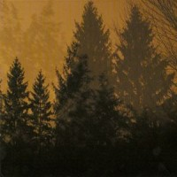 Purchase If These Trees Could Talk - Above The Earth, Below The Sky