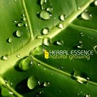 Purchase Herbal Essence - Natural Growing