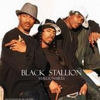 Purchase Stallionaires - Black Stallion