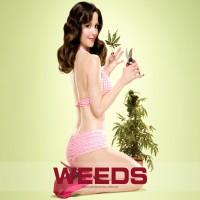 Purchase VA - Weeds
