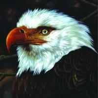 Purchase Mogwai - The Hawk Is Howling