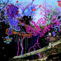 Purchase Animal Collective - Here Comes The Indian