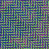 Purchase Animal Collective - Live (Merriweather Post Pavilion) (Live)