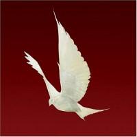 Purchase Floor - Dove