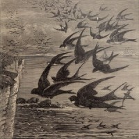 Purchase Neutral Milk Hotel - Little Birds (CDS)