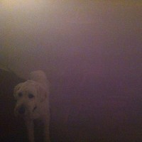 Purchase Oneohtrix Point Never - Dog In The Fog (EP)
