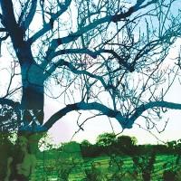 Purchase Banco De Gaia - Wimble Toot (EP)