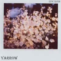 Purchase Yarrow - Yarrow