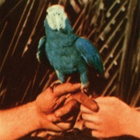 Purchase Andrew Bird - Are You Serious (Deluxe Edition)