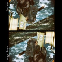 Purchase Maggie Rogers - Dog Years (CDS)