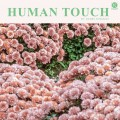 Buy Daniel Romano - Human Touch Mp3 Download