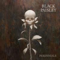 Purchase Black Paisley - Perennials