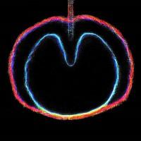 Purchase XTC - Wasp Star (Apple Venus Part 2)