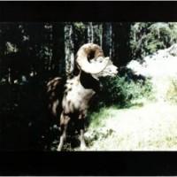 Purchase Woods - Ram (EP)