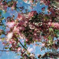 Purchase Nahash & Osheyack - Flowers Of The Revolution