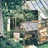 Purchase Smuv - Greenhouse