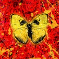 Buy Ed Sheeran - Shivers (CDS) Mp3 Download